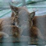 targu_mures_gradina_zoologica