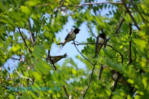 Discutii în copac