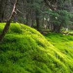 Drumetie in muntii Rodnei - urcare la lacul Lala Mare si Varful Ineu